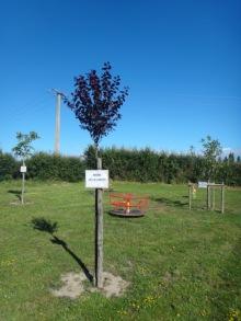 Nouveaux arbres plantés
