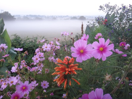 Fleur dans la brume