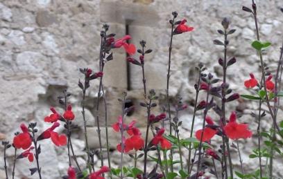 belles petites fleurs